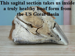 This sagital section takes us inside 